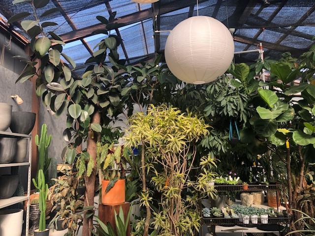 珍しい植物を買うならここ!HINOKI and the GREEN@松山