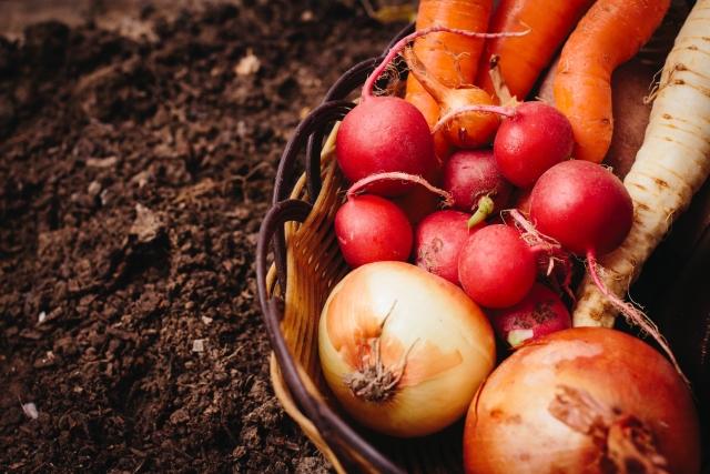 家庭菜園のコツはこれ!「コンパニオンプランツ」で害虫を寄せ付けない野菜作り