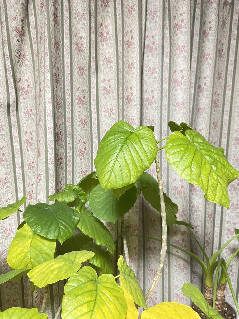 【植物の育て方】植物は人間と同じように生きています【水やり編】